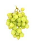 束葡萄绿色 免版税库存图片
