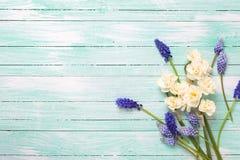 束蓝色muscaries和黄水仙在绿松石木头开花 库存照片