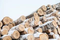 束许多新鲜的被锯的桦树日志,盖用雪在冬天 对角侧视图射击 免版税库存照片