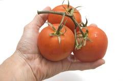 束起现有量藏品蕃茄 免版税库存图片