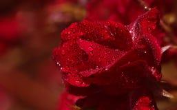 束起红色玫瑰 免版税库存照片