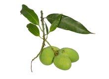 束起0f绿色芒果,隔绝在白色背景 免版税图库摄影