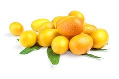 束金桔& x28; cumquat& x29;使用在白色背景的叶子 库存图片