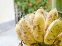 束香蕉在泰国 库存照片