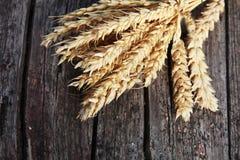 束麦子的金黄耳朵在木头的 库存图片