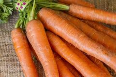 束从庭院的新近地被采摘的红萝卜 免版税库存图片