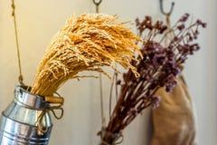 束水稻的耳朵在垂悬的铝罐的与紫色花一起 库存照片
