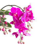 束紫罗兰色兰花 库存照片
