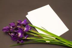 束紫色虹膜花和在黑暗的背景的空白 免版税库存图片