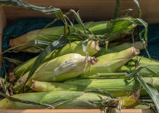 条板箱在地方farmstand的新鲜的甜玉米 库存图片