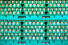 条板箱用在一个有机养鸡场的新鲜的鸡蛋 免版税库存照片