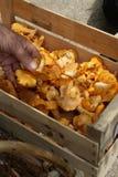 条板箱黄蘑菇 免版税库存照片