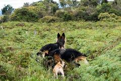 3条狗在大草原 库存图片