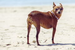 1条狗 免版税图库摄影