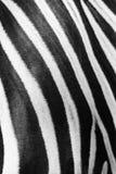 条纹特写镜头在斑马的 免版税图库摄影