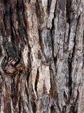 条纹的自然织地不很细吠声样式 免版税库存图片