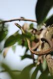 1条蛇 库存图片