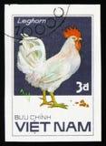 来克亨鸡雄鸡,从系列鸡品种,大约1986年 库存照片