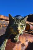 来到照相机的猫 免版税库存图片