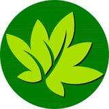 来回叶子的徽标 免版税图库摄影