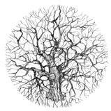 来回结构树 免版税库存照片
