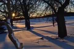 来在领域和树的日出在冬天场面 免版税库存照片