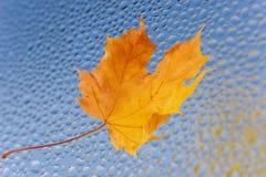 来的秋天有 免版税图库摄影