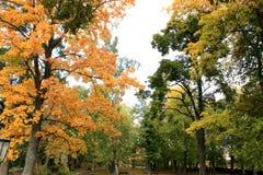 来的秋天近 库存图片