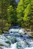 来自Savica瀑布,河Sava ne的冷的山小河 库存照片
