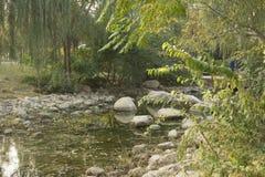 杨柳和石头 库存图片
