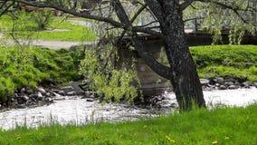 杨柳在一条河小河的倾向分支在脚桥梁附近在公园 影视素材