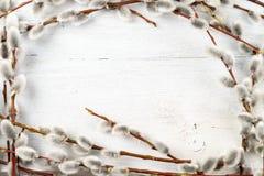 杨柳在白色织地不很细木背景的柔荑花框架 库存照片