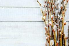 杨柳的枝杈在白板的 库存图片