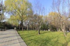 杨柳datang furong森林和足迹从事园艺 免版税库存图片