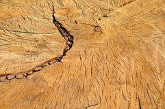 黑杨树木头裁减纹理 免版税库存图片