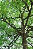 杭州西湖树 库存图片