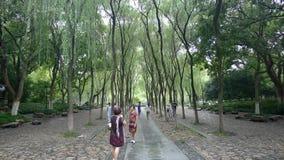 杭州西湖,唱歌在杨柳的奥廖拉诺 库存照片