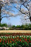 杭州taizhiwang公园 免版税库存照片