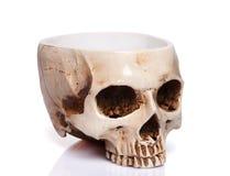 杯一块人的头骨 库存照片