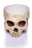 杯一块人的头骨 库存图片
