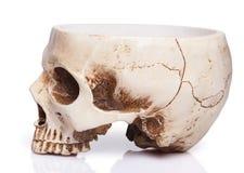 杯一块人的头骨 免版税图库摄影