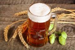 杯与啤酒花球果树和麦子的泡沫似的啤酒在老木背景 免版税库存图片