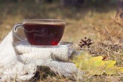 杯与白色温暖的围巾的红茶在与黄色橡木的自然 免版税图库摄影