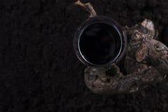 杯与藤的红葡萄酒在黑背景中 免版税库存图片