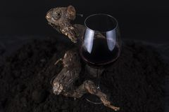 杯与藤的红葡萄酒在黑背景中 免版税图库摄影