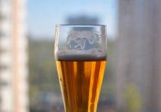 杯啤酒,俄罗斯莫斯科 免版税库存图片