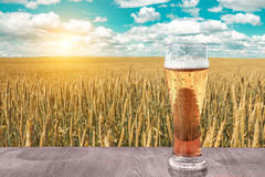 杯在日落的冰镇啤酒在麦田和蓝天背景  休闲和放松 新鲜的酿造的强麦酒 图库摄影
