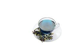 杯在白色背景的蓝色花茶 库存图片