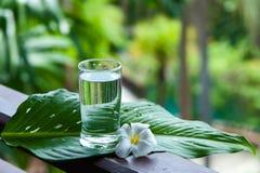 杯在美好的热带背景的淡水 免版税库存图片