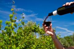 杯在葡萄行的酒  免版税库存图片